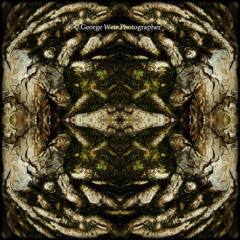 Pinus-mugo-01-sm